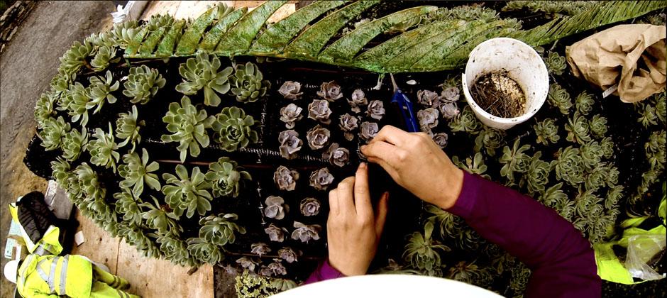 Mosaïcultures planting